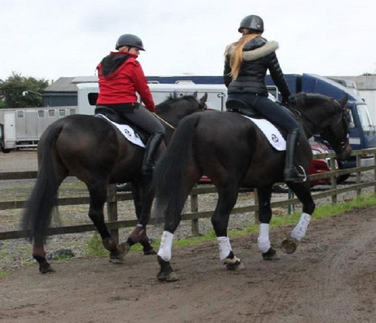 GP Saddles
